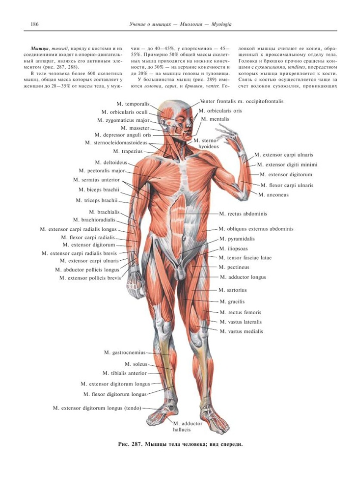 Atlas Of Human Anatomy Inbooker